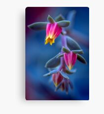 Dreaming of things succulent Canvas Print