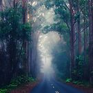 The Road Home... by Tracie Louise