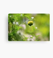 Seed Pod - Jupiter 9 Lens on EOS 7D Canvas Print
