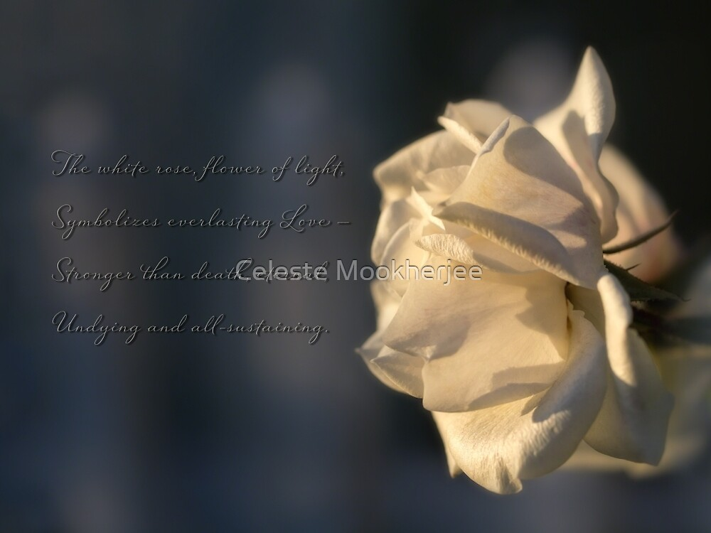 Flower of light by Celeste Mookherjee