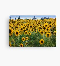 Pick me! Pick me! Canvas Print