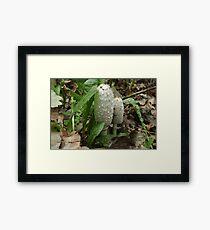 Mushroom Coprinus comatus Framed Print