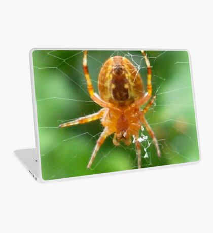 Baby Cross Spider (Araneus) Laptop Skin