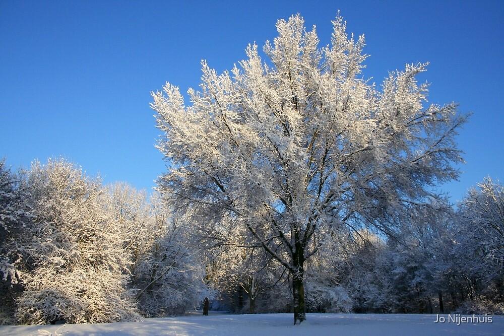 Snow Tree by Jo Nijenhuis