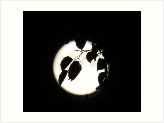 Vollmond - leuchtender Mond - bei Nacht - Dunkelheit von Marion Waschk