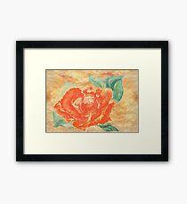 Sweet Summer Rose Framed Print