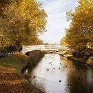 Coronation Bridge Victoria Park Stafford 3 by Ann Garrett