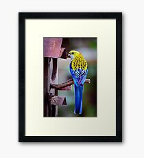 Sitting Pretty.... Framed Print