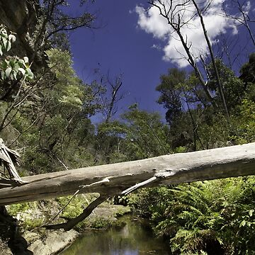 Grand Canyon, Blue Mountains, Australia by roger