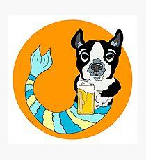 Bonker the Boston Terrier Photographic Print