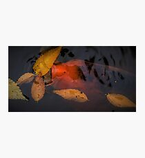 Clean Up Koi Photographic Print