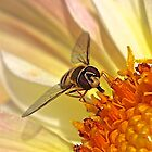 Hoverfly by John Thurgood
