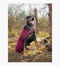 Doberman Lumber Jack Photographic Print
