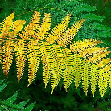 Ferns by patmo