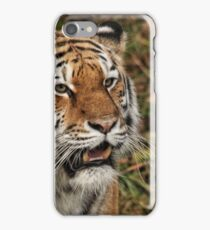 Amur Tiger - Panthera tigris altaica iPhone Case/Skin