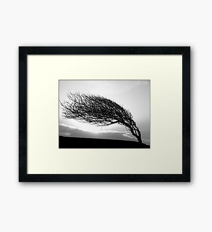 Where the wind blows Framed Print