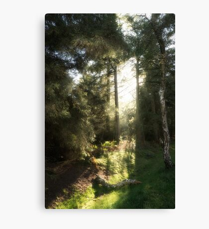 Light in the Forest Canvas Print