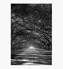 Oak Lane Photographic Print