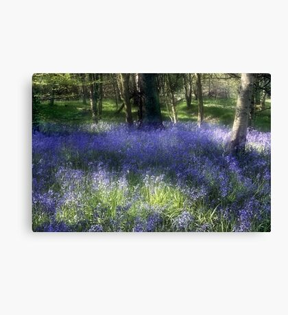 More Bluebells Canvas Print