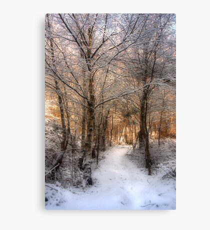 Deer Path in the Snow Canvas Print