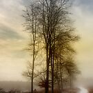 Christmas Eve in the Snow - 3 by Ann Garrett