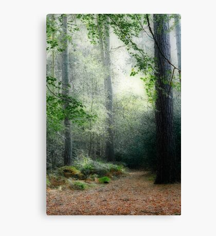 Faerie Forest Canvas Print