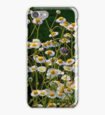 Daisy Fleabane  iPhone Case/Skin