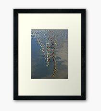 Nautical Series IV Framed Print