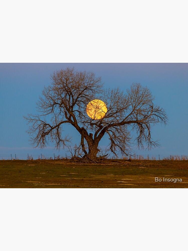 November Supermoon Tree by mrbo