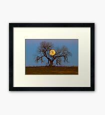 November Supermoon Tree Framed Print
