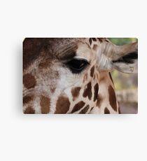 Giraffe Eye Canvas Print