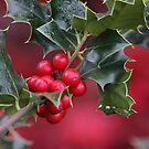 Seasonal Reds by Tracy Friesen