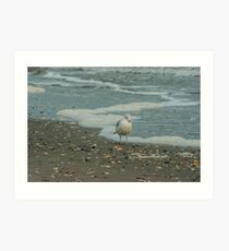 Ring-billed gull scapes Art Print