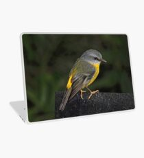 Eastern Yellow Robin Laptop Skin