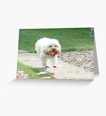 Cockapoo with ball  Greeting Card