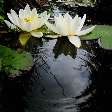 Water lilies by Yanin