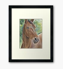 Tennessee walking horse Framed Print