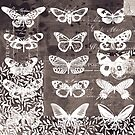 Black and white butterfly collage by Carolynne
