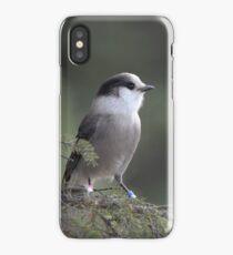 Precious Gray Jay iPhone Case/Skin