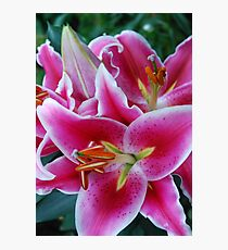 Oriental Lily Photographic Print