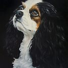 Cavalier King Charles Spaniel by Anne Zoutsos