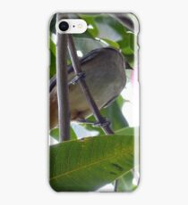 Bird Eating Mango iPhone Case/Skin