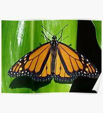 Monarch In Australia Poster