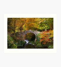 Tollymore Forest Park  County Down  Northern Ireland Art Print