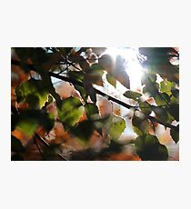 Fall Leaves IV Photographic Print