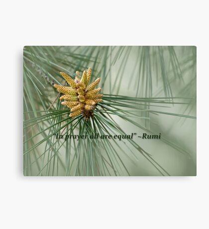 Aleppo pine - a prayer Canvas Print