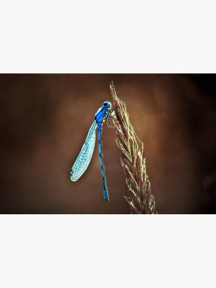 blue dragonfly by dirkhinz