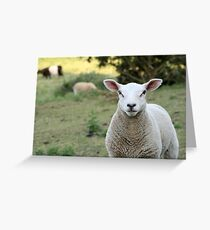 A Curious Sheep from Rye England Greeting Card
