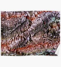 Textured Cork Tree Abstract Poster