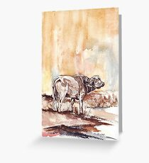 African Buffalo Greeting Card